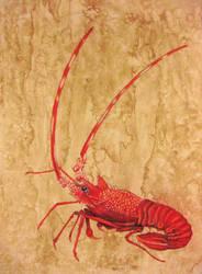 Sea Crayfish by paintedmookers