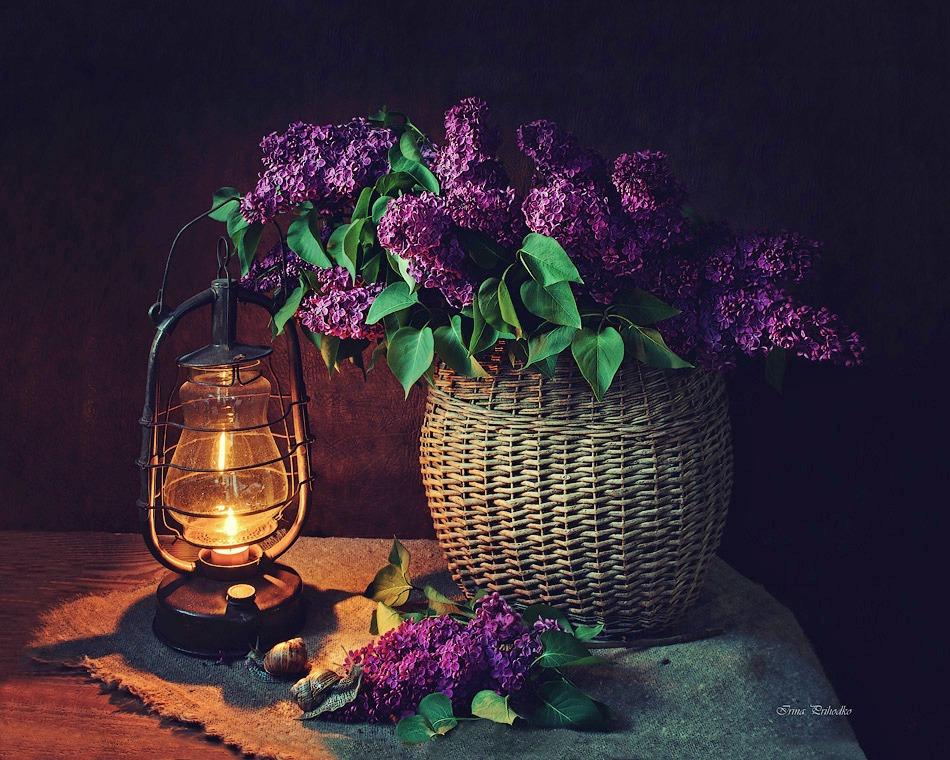 Lilac evening by Daykiney