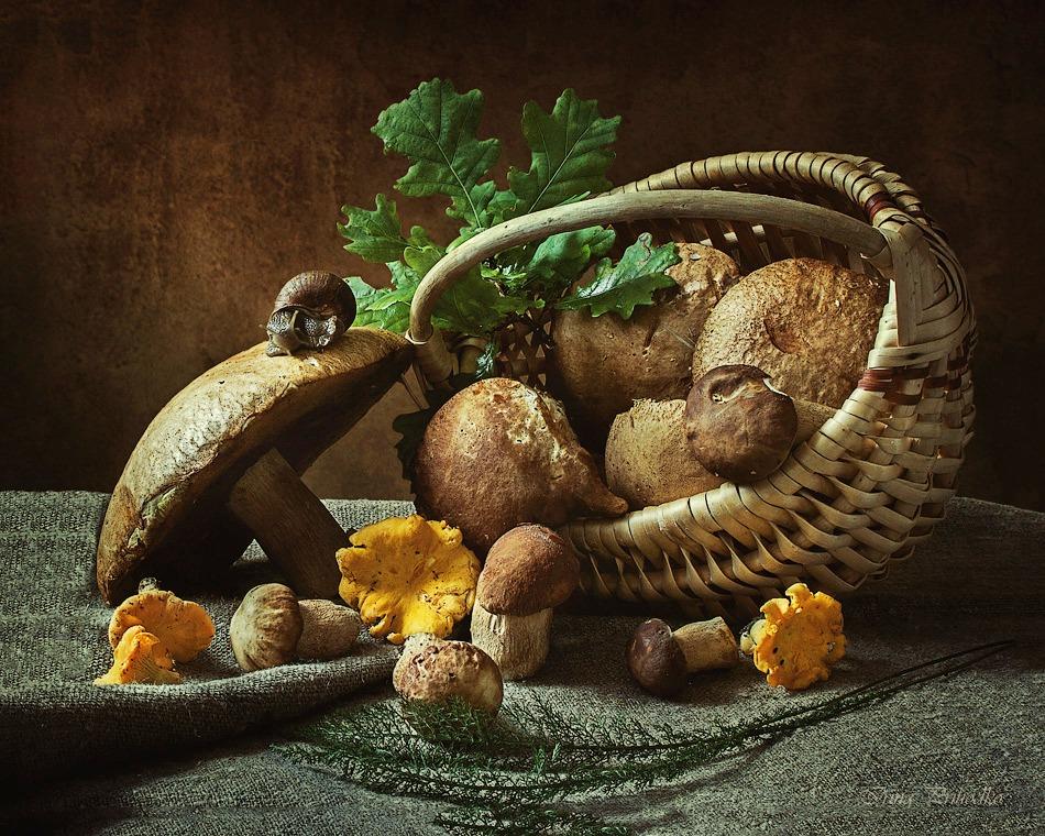 Mushroom time to by Daykiney