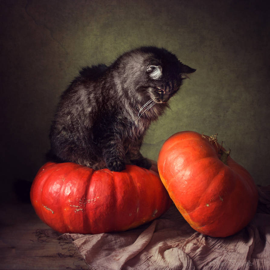 Car of pumpkins by Daykiney