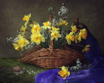 Still life with yellow daffodils