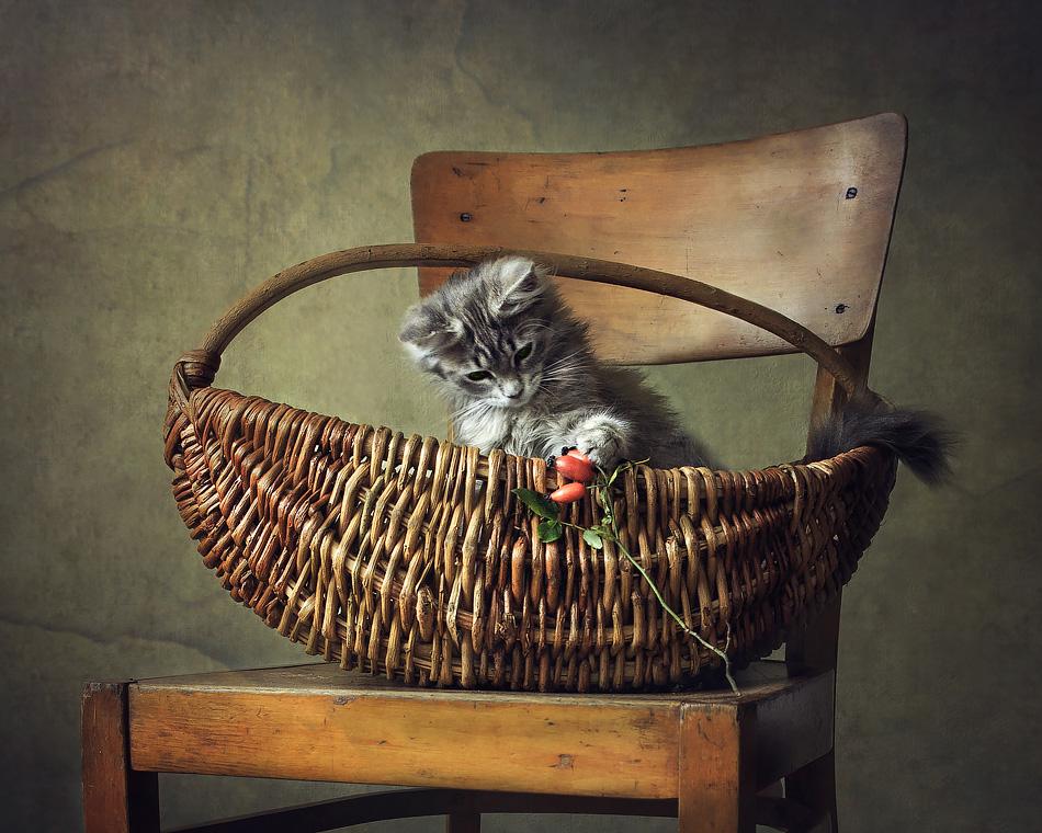 Kitten playing by Daykiney