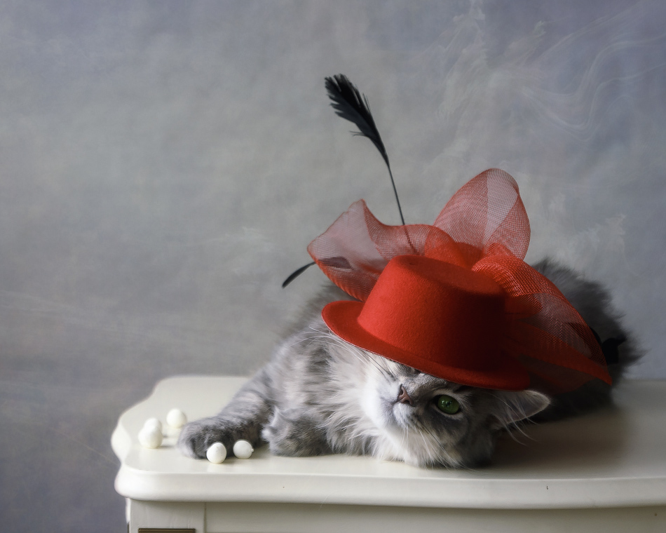 Fashion-monger by Daykiney