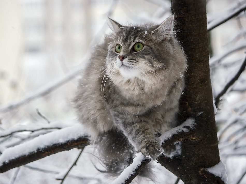 Snowy walk Masyanya on the trees by Daykiney