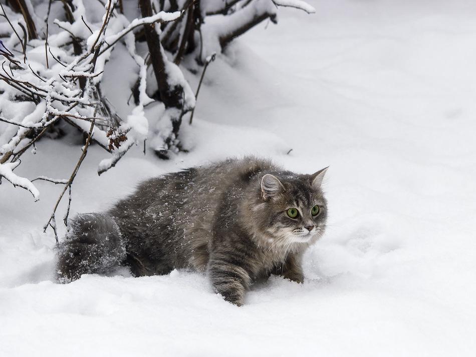 Winter hunter by Daykiney