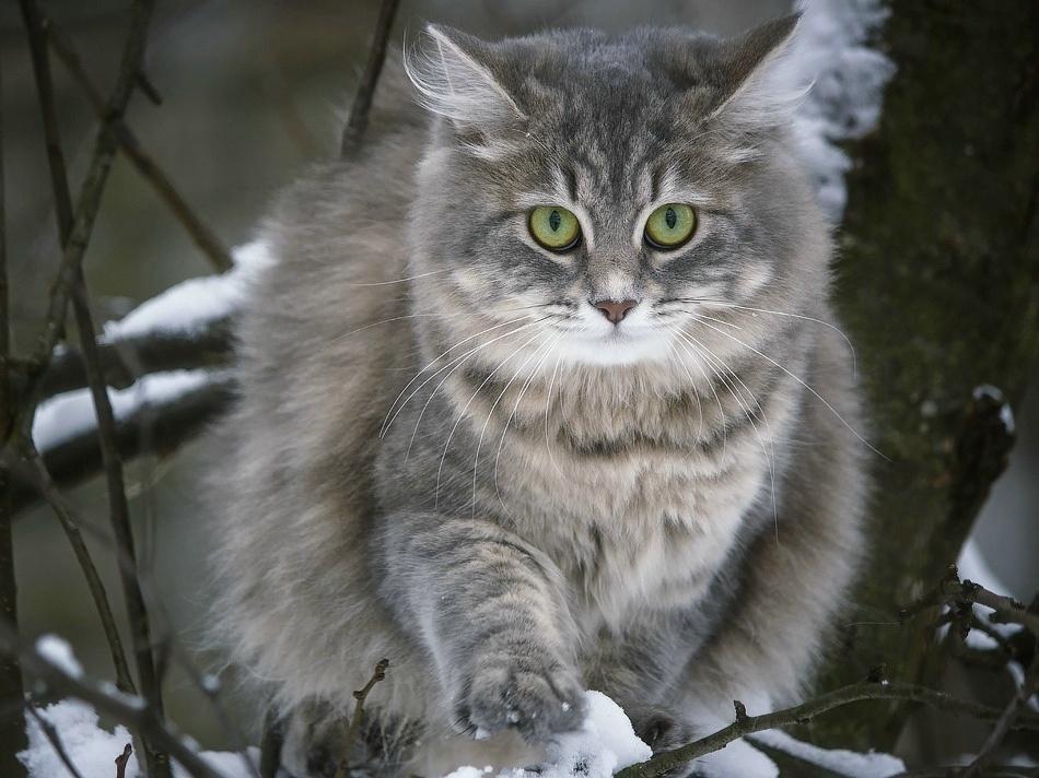 Winter walk cats Masyanya by Daykiney