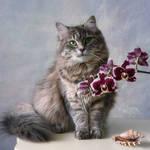 Masyanya and orchids