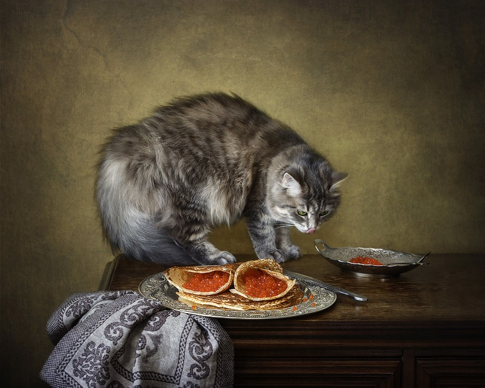 Look at that, Pancake!
