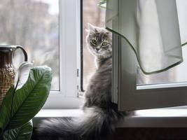 Breath of fresh air by Daykiney