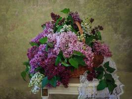 Lilac fragrant by Daykiney