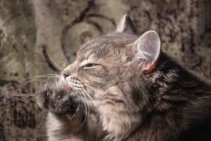 Masyanya lick the hind paw by Daykiney