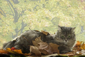 Masyanya and golden autumn by Daykiney
