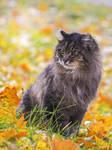 Mason and autumn