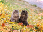 Two on the autumn slope