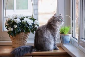 Balcony observer by Daykiney