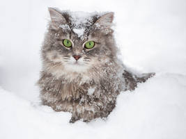 Snowy portrait of Masyanya