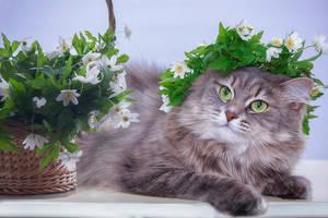 Miss Spring by Daykiney