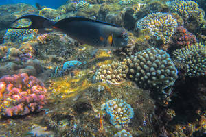 Inhabitants of the Red Sea coral reef by Daykiney