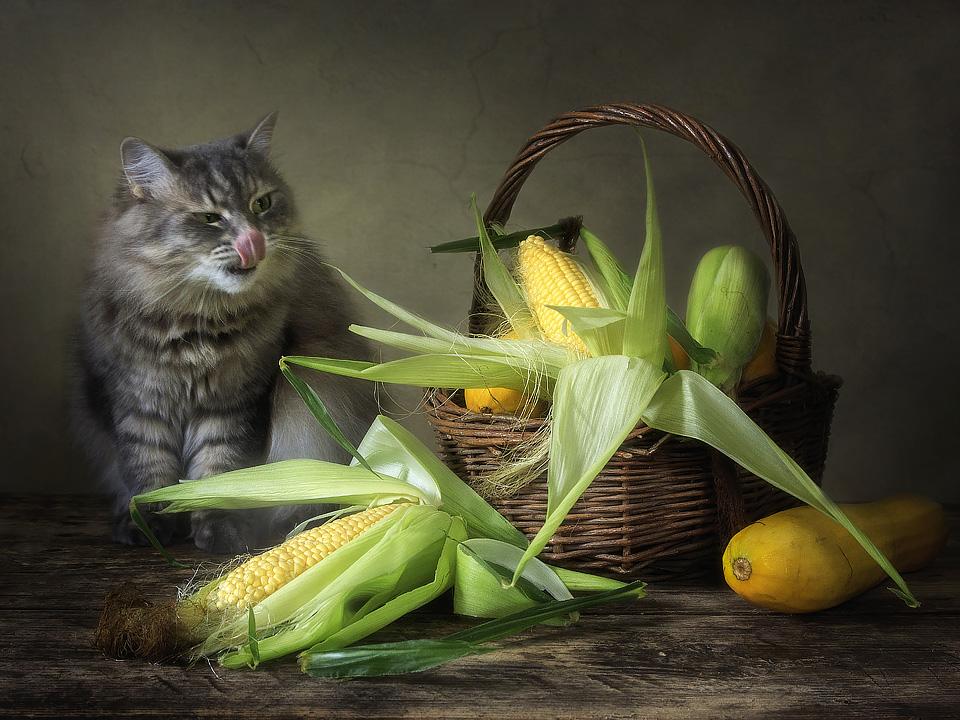 Masyanya and corn by Daykiney