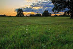Summer sunset on a meadow