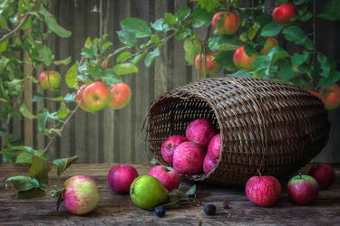 Harvest year for apples by Daykiney