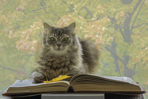 Cat scientist by Daykiney