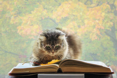 Masyanya is a reader by Daykiney