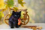 The first autumn for a little black kitten