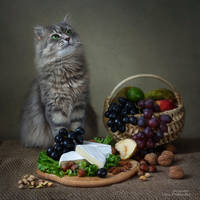 Still life with Camembert cheese and  Masyanya by Daykiney
