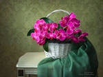 Still life with basket of orchids