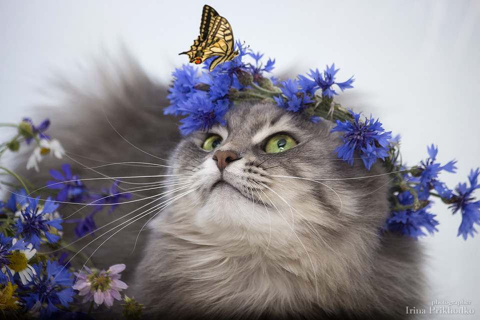 Masyanya in wreath of cornflowers and butterfly by Daykiney