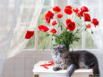 Under the bouquet of red poppies