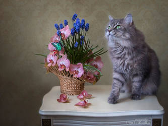 Masyanya is posing with with basket of flowers by Daykiney