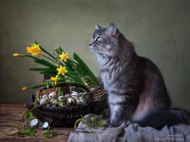 Eternal spring by Daykiney