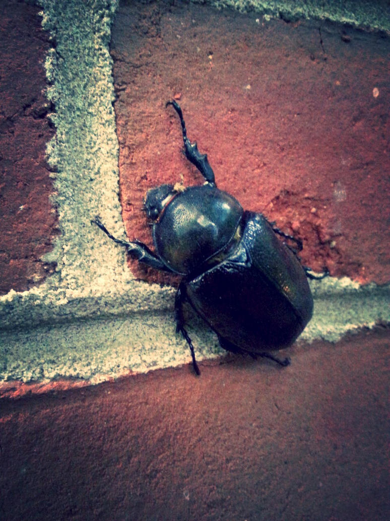 Big Giant Beetle on My House by Cozytailmom
