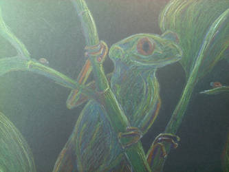 Frog by ishrahsan