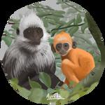 Weeklies #47 - White-headed langur
