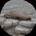 Weeklies #3-08 Seal by Aurelie-Charmeau