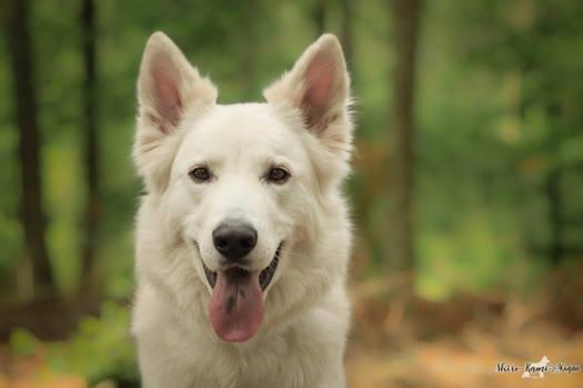 Good boy portrait