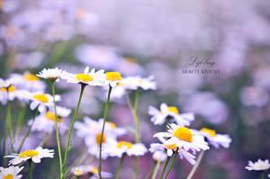 Precious dream fields by meretekamomilla