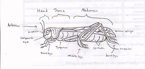 Grasshopper External Diagram Crazywidowfo