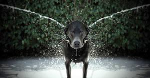 Dog's wash