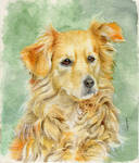 Dog watercolors *commission*