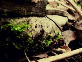We found... by Naddar