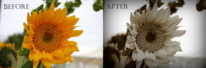 Flower before/after editing