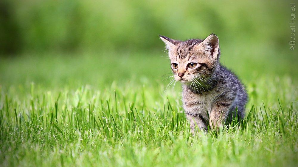 Cute cat by masterdead