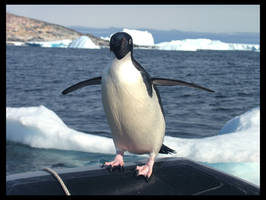 penguin two by italo