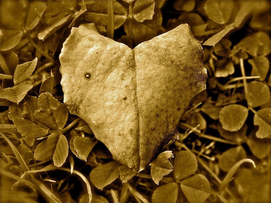 Mournful Heart by Samela7