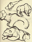 Life Drawing - Grizzly Bear