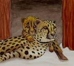 Cheetahs At The Zoo